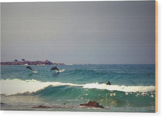 Dolphins Swimming With The Surfers At Asilomar State Beach  Wood Print