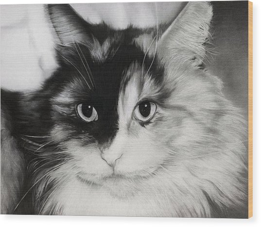 Domestic Cat Wood Print
