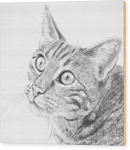 Domestic Cat Portrait Wood Print