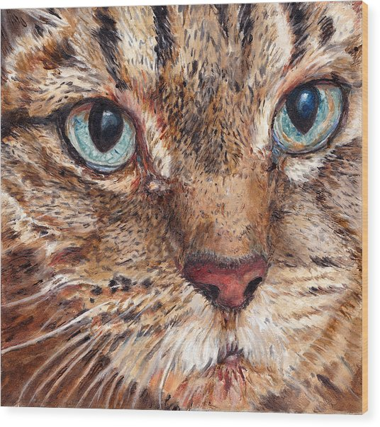 Domestic Tabby Cat Wood Print