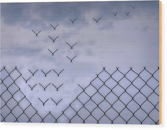 Dona??t Fence Me In! Wood Print by Bjorn Emanuelson