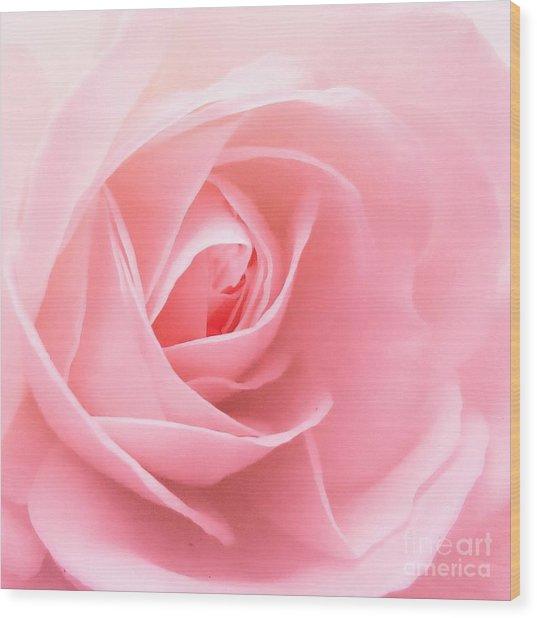 Donation Rose Wood Print