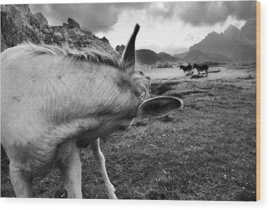 Donkeys Wood Print