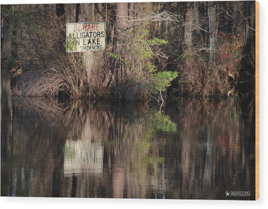 Don't Feed The Alligators Wood Print