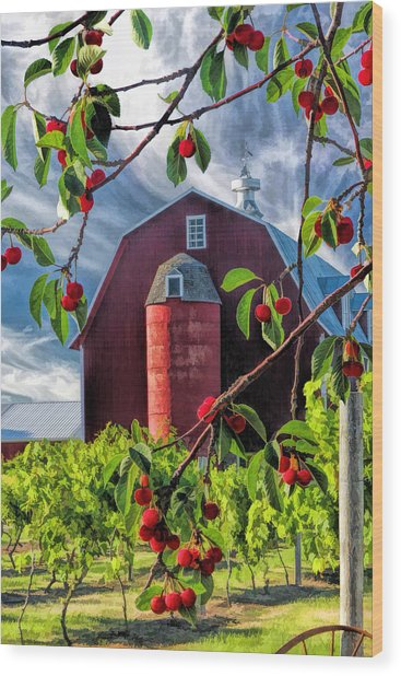 Door County Cherry Harvest Red Barn Wood Print