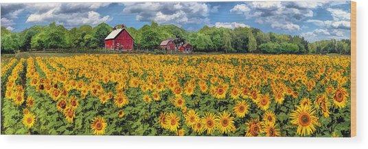 Door County Field Of Sunflowers Panorama Wood Print