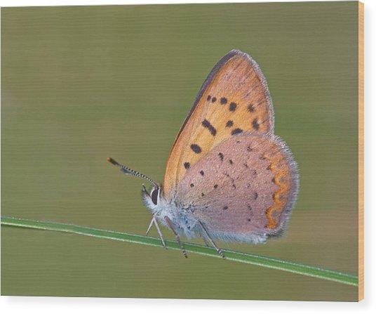 Dorcas Copper Wood Print