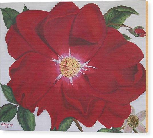 Dortmund Climber Rose Wood Print