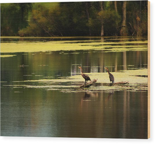 Double Crested Cormorants Wood Print by Scott Hovind