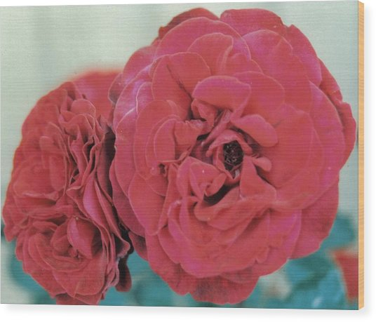 Double Desert  Red Roses Wood Print by Dusty Rose