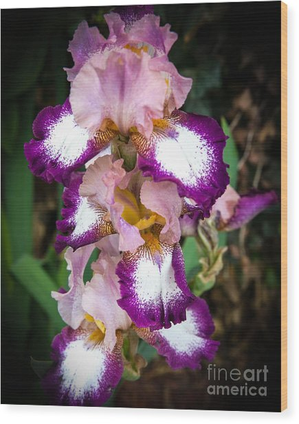 Double Iris Wood Print by Sue Huffer