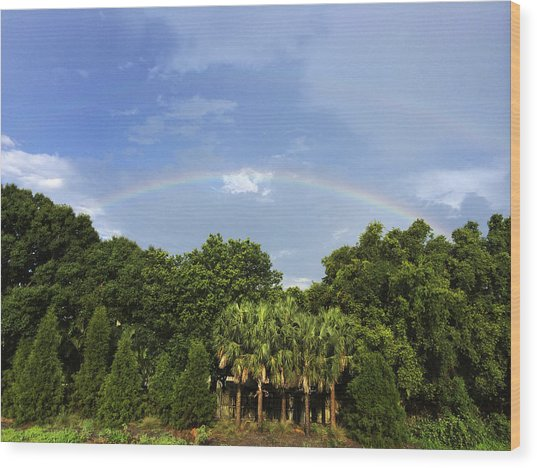 Double Rainbow St. Pete Fl Wood Print