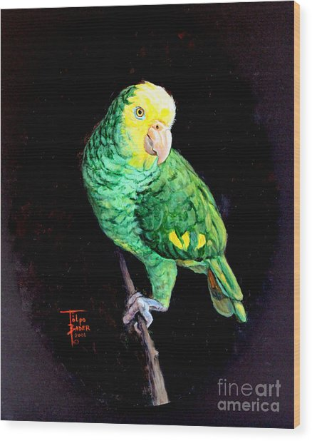 Double Yellow Headed Amazon Paco Wood Print