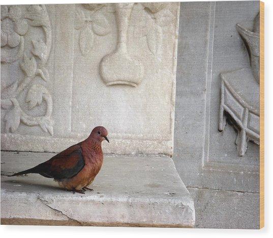 Dove On Historic Art Wood Print