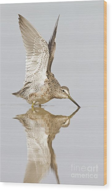 Dowitcher Wing Stretch Wood Print