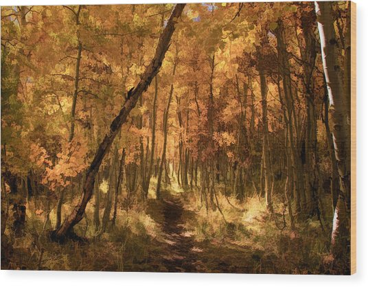 Down The Golden Path Wood Print