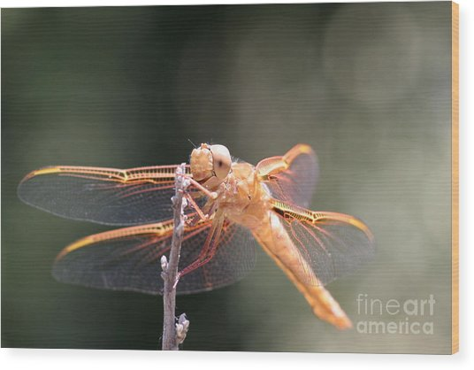 Dragon Fly Wood Print by Laura Paine