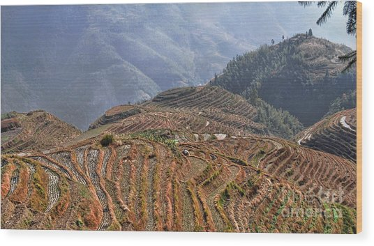 Dragon S Backbone Rice Terraces Wood Print