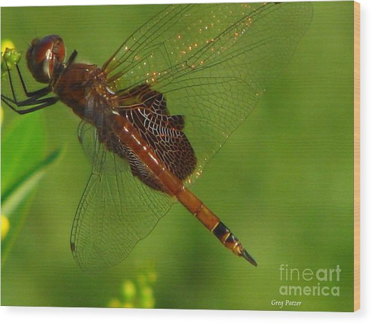 Dragonfly Art 2 Wood Print by Greg Patzer