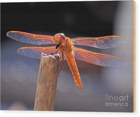Dragonfly Eating An Insect Wood Print