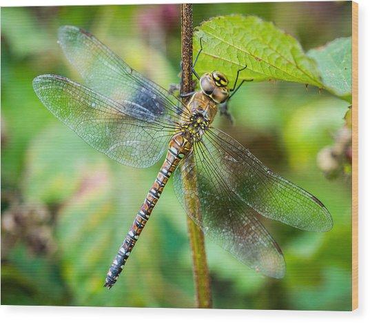 Dragonfly. Wood Print