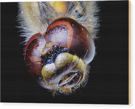 Dragonfly Head Wood Print by Heiti Paves