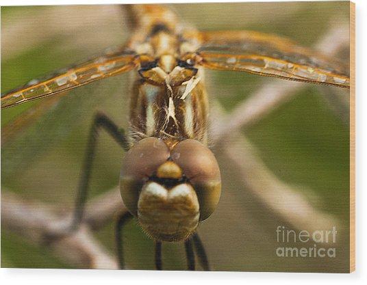 Dragonfly Head Wood Print by Mae Wertz