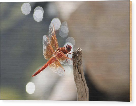 Dragonfly Highlights Wood Print
