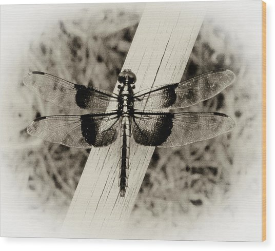 Dragonfly In Sepia Wood Print