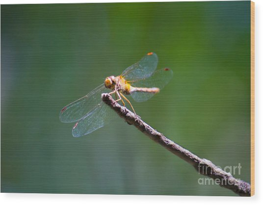 Dragonfly In The Sun Wood Print