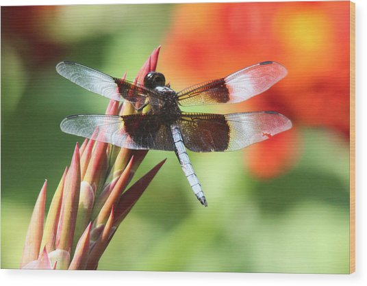 Dragonfly Wood Print by Jill Bell