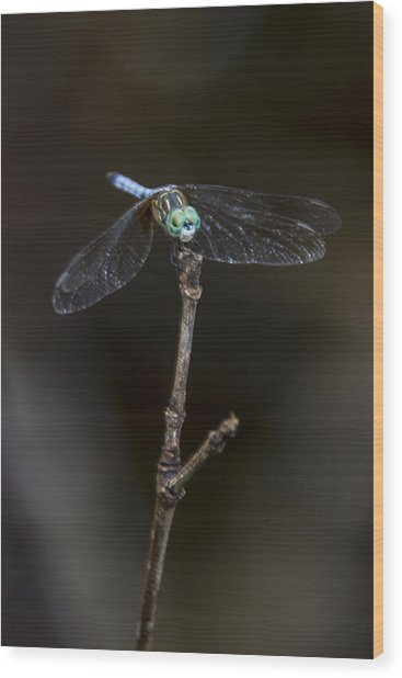 Dragonfly On Branch Wood Print