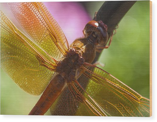 Dragonfly Patterns Wood Print