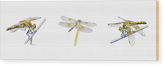 Dragonfly Trilogy Wood Print