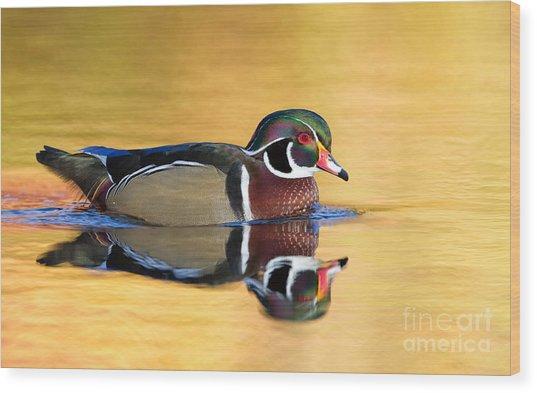 Drake Wood Duck Wood Print by Joshua Clark