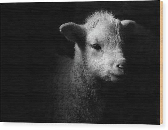 Dramatic Lamb Black & White Wood Print