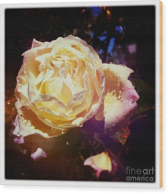 Dramatic Rose Wood Print