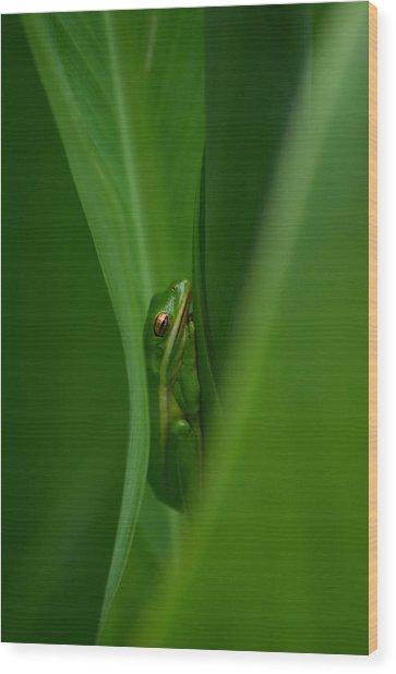 Dream Green  Wood Print