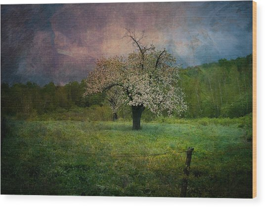 Dream Of Spring Wood Print