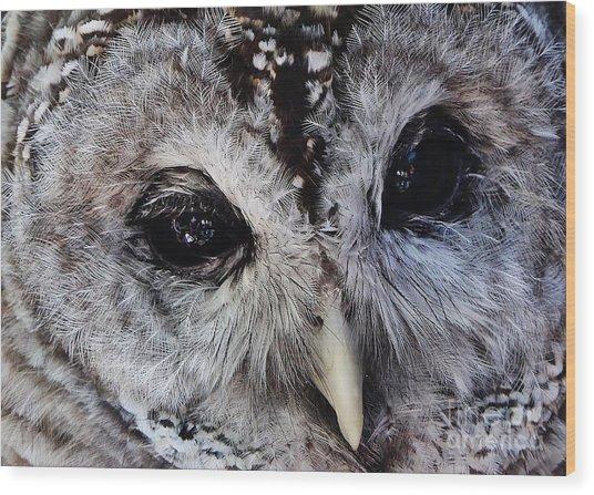 Dreaming Owl Wood Print