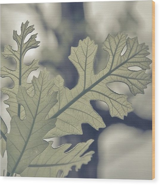 Dreamt Myself Astray | #spring #nature Wood Print by Lotus Carroll