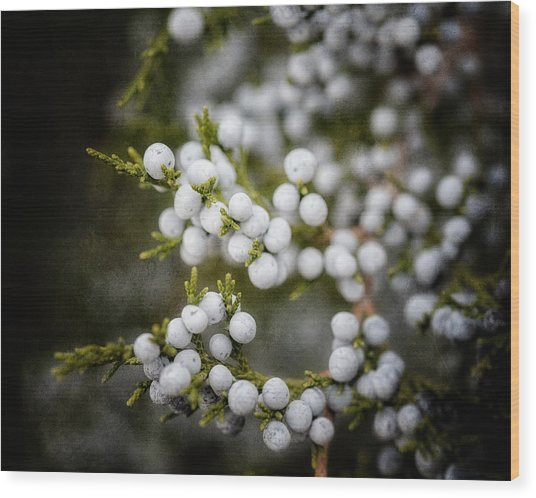 Dreamy Dark Juniper Berries Wood Print by Lisa Russo
