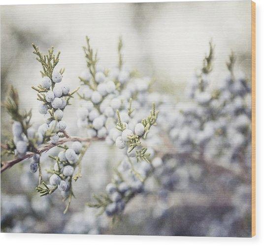 Dreamy Pastel Juniper Berries Wood Print by Lisa Russo