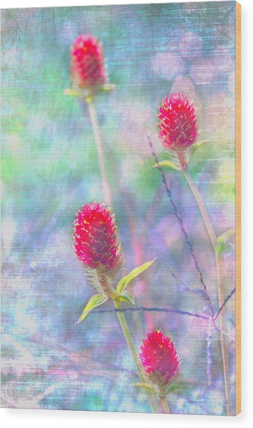 Dreamy Red Spiky Flowers Wood Print by Karen Stephenson