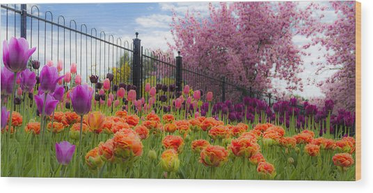 Dreamy Tulip Garden Wood Print