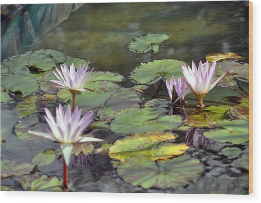 Dreamy  Water Lillies Wood Print by Judith Russell-Tooth
