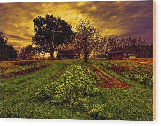 Dreary Farm Day Wood Print