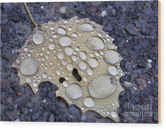 Drenched Leaf Wood Print