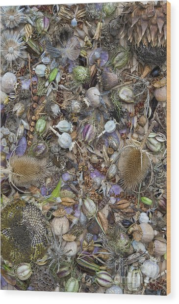 Dried Flower Seeds Wood Print