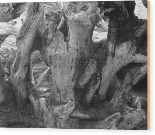 Drift Wood Cove Wood Print